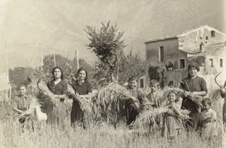 The D'Andrea farm in an old photo